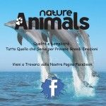 Adv 600x600 2 150x150 Nature and Animals   nuova rivista fotografica edita dalla Editrice Progresso